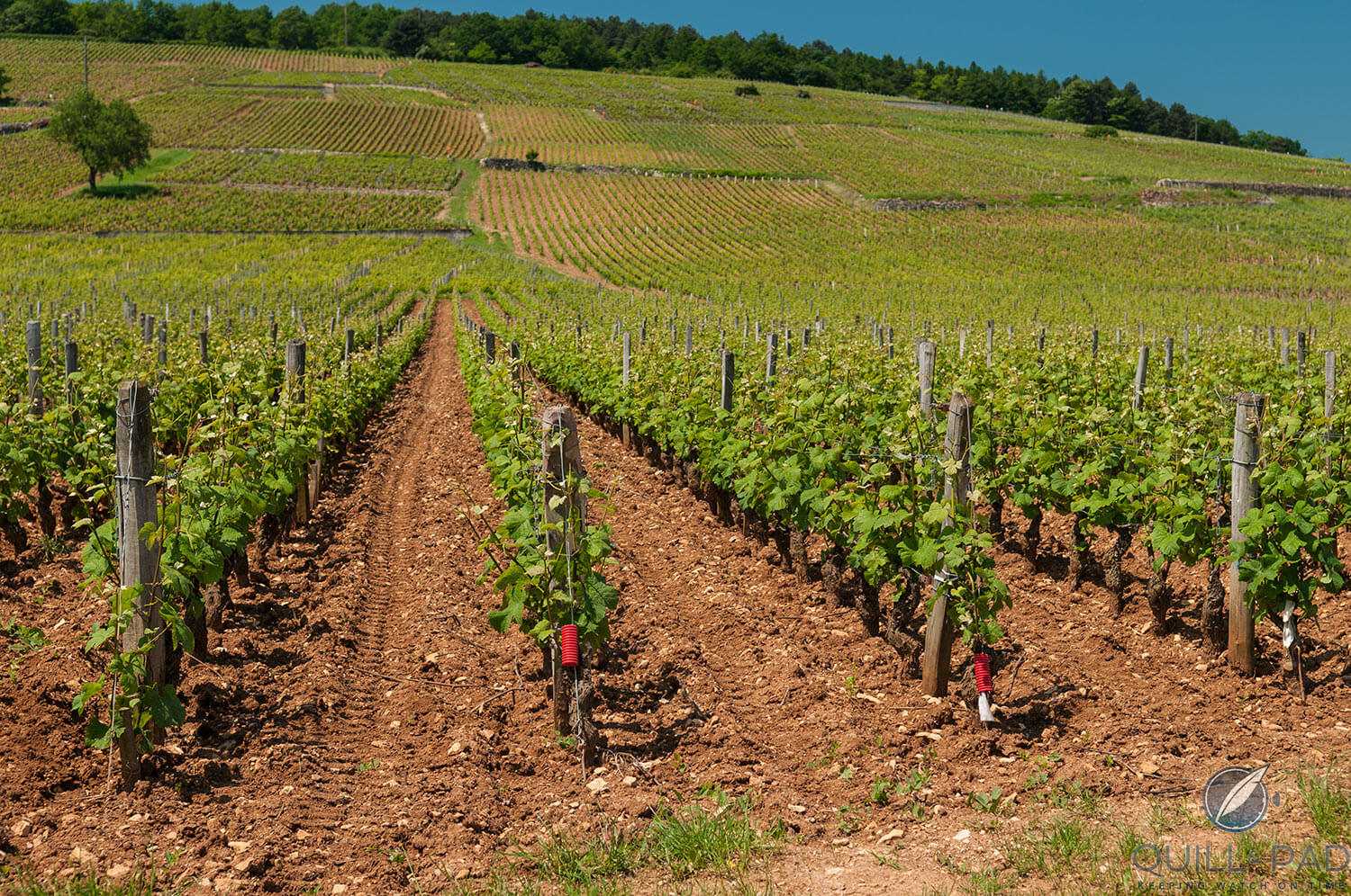 Vineyards of the Domaine de la Romanée-Conti in Burgundy